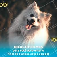 Post Foto Imagem E Frase Para Pet Dicas Ahazou