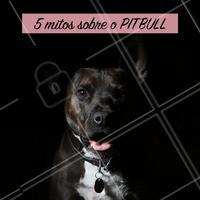 """O pitbull tem fama de violento e perigoso, porém isso não passa de um preconceito. Vamos desmentir 5 mitos sobre essa raça!   1) """"Pitbulls são violentos por natureza."""" Assim como qualquer cão, apenas sua criação influenciará no seu comportamento.  2) """"O Pitbull consegue travar a mandíbula quando morde."""" A mordida do Pitbull é exatamente igual à de qualquer outro cachorro! 3) """"O cérebro do Pitbull cresce mais do que o seu crânio permite"""" Este mito surgiu como um motivo pelo qual essa raça """"enlouquece"""" e se tornam agressivos. É completamente falso! 4) """"Os Pit Bull não sentem dor quando lutam."""" Todo cachorro sente dor igual e submeter a raça a lutas é uma crueldade. 5) """"Pitbulls não podem conviver com outros cães."""" Eles podem conviver com qualquer outra raça, se a introdução for feita corretamente.  #pitbull #ahazou #cachorro #maedepet #petshop #pets"""