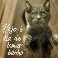 Seu gatinho morre de medo da hora do banho? 😱 Fica tranquilo! Aqui temos uma equipe preparada e capacitada para deixar seu gatinho limpo e calmo, sem passar por estresse. #banho #ahazou #pet #gato