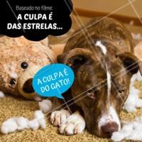 """""""Juro, eu tava aqui quietinho!"""" 😂😂 #cachorro #ahazou #aculpaedasestrelas"""