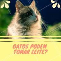 Quem nunca viu um desenho de um gato bebendo leite? Apesar dessa ideia que criamos dos gatos, o leite industrializado que bebemos faz muito mal para o organismo dos gatinhos. O leite de vaca possui muita lactose e caseína, mais do que os gatos são capazes de digerir normalmente! O leite pode causar diarréia severa e fortes dores de estômago. Cuidado! 😱 #gato #ahazou #gatos #leite #pet #petshop #veterinario