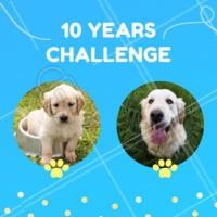 Esse desafio a gente amou! 😍❤️ #cachorro #ahazou #pet #10yearschallenge #10yearchallenge  Não conhece esse Meme que está bombando? Nós te explicamos: https://ahazou.com/10-year-challenge-entenda-o-desafio-2009-2019/