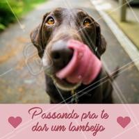 Um lambeijo vale mais que mil palavras! 💋 #cachorro #ahazou #amocachorro #Pet