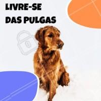Só quem já teve um pet com pulgas sabe a luta que é acabar com elas! Venha conhecer nossa variedade de produtos para acabar com esse problema de vez 😉 #pulgas #ahazou #pulga #petshop #pet #cachorro #gato
