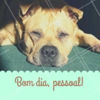 Post Foto Imagem E Frase Para Pet Bom Dia Ahazou