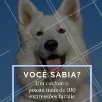 Você sabia??? 🐶♥️ #dogs #expressaofacial #caes #ahazoupet #amocachorros #loucosporcachorros