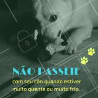 Vamos cuidar dos nossos bichinhos! #dicas #dog #ahazou