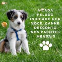 Quanto mais cachorros, melhor 🐶😍 Indique um amiguinho do seu pet, e ganhe descontos nos pacotes mensais de passeios do seu peludo! #dogwalker #passeios #ahazoupet #promo #indicacao #cachorro