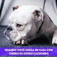 Não adianta esconder! 😂 #cachorro #pet #ahazoupet #engracado