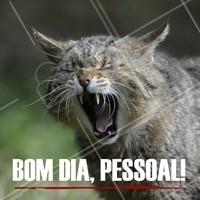 Quem aí já acordou? 🐱 #gato #ahazou #pet