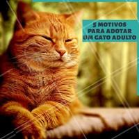 """""""1. Você conhecerá melhor sua personalidade⠀ 2. O gato adulto tende a ser mais calmo⠀⠀⠀⠀⠀⠀⠀⠀ 3. Gatos adultos são bem higiênicos⠀⠀⠀⠀⠀⠀⠀⠀⠀ 4. Eles costumam vir socializados⠀⠀⠀⠀⠀⠀⠀⠀ 5. Todos merecem uma chance, inclusive os adultos e idosos. 🐱❤️️ #pet #ahazoupet #gatos #cats #adocao"""""""