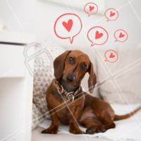"""E Deus disse """"""""Ame o próximo"""""""" Os cachorros foram os primeiros a entender ❤️🐶 #pet #dog #amor #ahazou"""