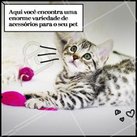 """""""Quer novidades e acessórios lindos para o seu pet? Então corre pra cá.  #pet #ahazoupet #acessorios"""""""