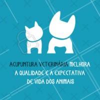 A acupuntura veterinária alivia as dores mais fortes que um cão ou um gato, por exemplo, podem ter. Pode ser uma forma de cuidar do animal evitando que ele sofra mais do que as consequências do problema de saúde. #pet #acupunturaveterinaria #ahazou #beneficios #acupunturaparapets