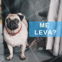 Seu pet também faz essa carinha? #passeio #pet #ahazoupet #ahazou #cachorro