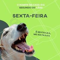 Alguém aí se identifica com o Humor de Sexta? 😁 #sextafeira #pet #ahazou #humor