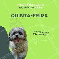 Alguém aí se identifica com o Humor de Quinta? 😁 #terçafeira #pet #ahazou #humor