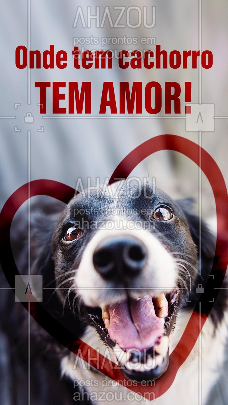 Post Foto Imagem E Frase Para Pet Motivacional Stories
