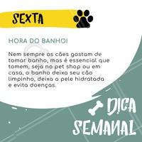 Confira essa dica incrível pra fazer a sua vida e a do seu amigo bem mais feliz! 🐶💛 #cachorro #pet #ahazou #dica