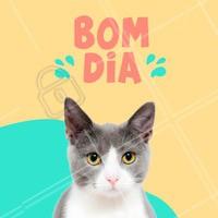 Um excelente dia para todos !  #bomdia #ahazou #pets #gatos