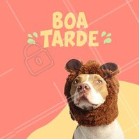 Boa tarde para todos nós !  #dog #ahazou #boatarde