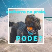 Na praia, seu cachorro entra em contato com vários fatores de risco, como o sol, perigo de molhar os ouvidos, além das doenças presentes na areia. Apesar dos riscos, é possível levar seu pet, desde que você tome todos os cuidados para não colocar ele em perigo. #pet #meudog #ahazou #dognapraia