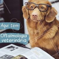 Traga o seu amiguinho para fazer uma consulta! Agende seu horário #veterinario #pet #ahazoupet #petlovers