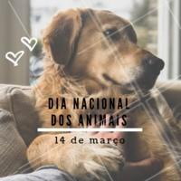 Hoje é dia dos nossos amigos mais fiéis ❤️️ #diadosanimais #dianacionaldosanimais #animal #pet #ahazou #14demarço