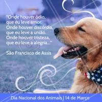 Hoje é Dia Nacional dos Animais! Como não amar esses anjos? ❤️  #animal #ahazou #animais #diadosanimais #dianacionaldosanimais
