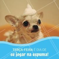 Toda terça-feira o banho do seu pet tem desconto! Gostou? Então agende um horário. 🐶🐱 #pet #banho #ahazou #promocao #desconto #tercafeira