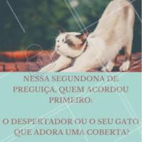 """Que delícia receber um bom dia desses, não é? """"Conta pra gente.🐱 #pet #enquete #ahazu #segundou #gato"""