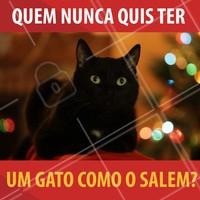 Quem nunca quis ter um gatinho de estimação como o Salém de as aventuras de Sabrina Aprendiz de Feiticeira?  😂 Eu já! #salem #gatosalem #cat #sabrina #witch #omundosombriodesabrina #netflix #nostalgia #ahazou #quots #salemquots #meme #funny #catlovers #blackcat