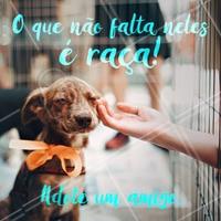 Você vai descobrir a raça que eles tem quando souber sobre tudo que já passaram! Adote um cão ou gato resgatado <3 #pet #adote #ahazou #ahazoupet #resgatados #amigos