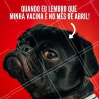 Mesmo que tenhamos dó, não deixe as vacinas do seu amiguinho atrasar! 😉 #vacina #ahazou #petshop #cachorro #veterinario