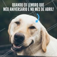 Amiguinhos que fazem aniversário em abril 💙 #aniversario #ahazou #cachorro #amigo #amor #ahazoupet #pet