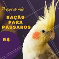 🐦 Procurando a melhor qualidade em alimentos para o seu pássaro? Aqui tem! E durante o mês de Abril, as rações para pássaros estão com um super desconto. Venha aproveitar 😉 #pet #ahazoupetshop #passaros