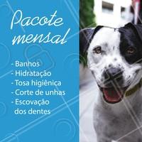Seu pet merece ficar bem cuidado todo mês! Que tal aproveitar nosso pacote promocional mensal e deixar seu pet sempre limpinho, cheiroso e saudável? 🐶💕 #cachorro #ahazoupet #gato #petshop #pets #pet #promoçao #promocional