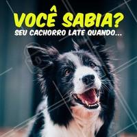 ✔️ quer se comunicar com outro pet ✔️ está alegre ✔️está com medo ✔️quer alertar seu dono de um perigo ✔️ está ansioso  #cachorro #ahazoupet #latido #curiosidades