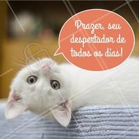 Só quem é dono de gato vai entender essa 😺 #gato #ahazoupet #pets