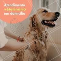 Quer atendimento veterinário no conforto da sua casa? Seu pet não pode se locomover? #veterinario #ahazoupet #pet