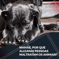 O que você diria pra esse anjinho? 😢 #cachorro #ahazoupet #animais #pets #gato