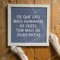 Esses sim sabem o real significado de humanidade! #pets #ahazoupet #animais