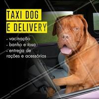 Nós temos serviço de Taxi Dog e Delivery para seu amiguinho! Trazendo mais conforto para você e seu pet. 🐶 #pet #ahazoupet #taxidog #delivery #petshop