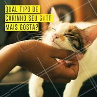 Comenta aqui qual carinho seu gato mais gosta 👇 #gato #ahazoupet #pet