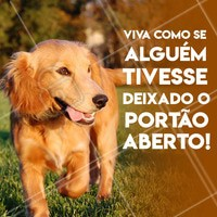 Liberte-se e ame a sua liberdade🙏 #dog #doggie #doglife #feliz #felicidade #liberdade #freedom #ahazou #moti #happy #petlovers #doglovers