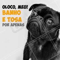Não vai perder essa promo né? 😱 Se vira nos trinta e traga seu pet pra um banho e tosa! #banhoetosa #ahazoupet #promoçao #petshop