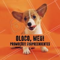 Não vai perder nossas promos né? 😱 Se vira nos trinta e aproveite! #pet #ahazoupet #promoçao #petshop #veterinario #animais