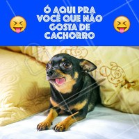Não gosta de cachorro? Então não gosto de você! 😜 #cachorro #ahazoupet #engraçado #amocachorro