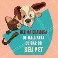 Ainda dá tempo de cuidar do seu pet em Maio! #pet #ahazoupet #maio