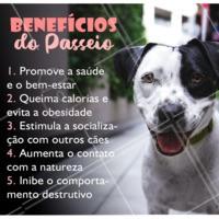 Já imaginou que um passeio tinha todos esses benefícios? 😱 Seu cãozinho merece ser bem cuidado, por isso passeios são tão importantes. Conheça meus pacotes de dogwalker e traga mais saúde, diversão e bem estar pro seu dog 🐾 #cachorro #ahazoupet #dogwalker #passeio